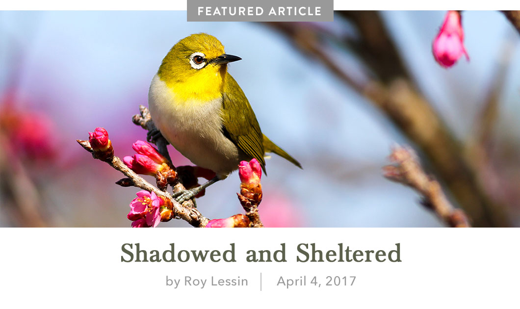 Shadowed and Sheltered Featured Devotional